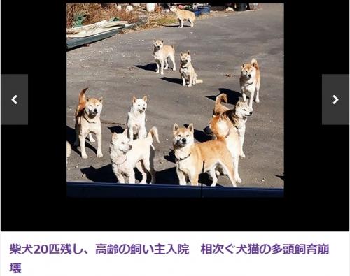 静岡県多頭飼育崩壊現場