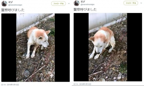さいたま犬01~02