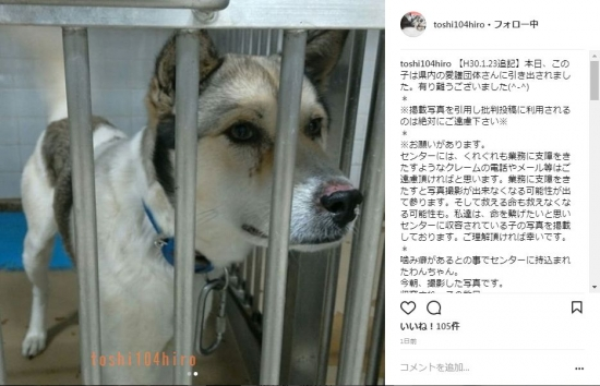 泣いてる犬(周南)18-01-24