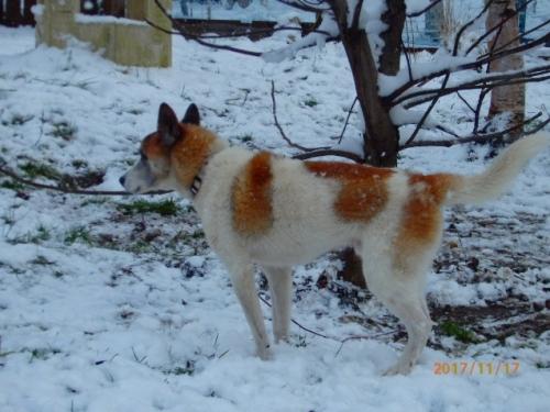 見放された老犬04