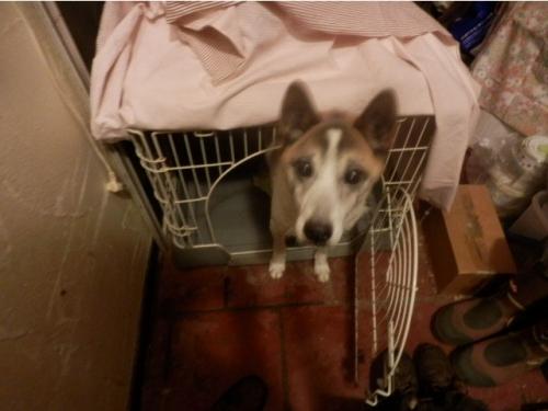 見放された老犬05