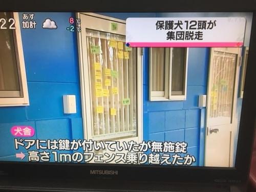 ピースワンコ犬脱走03