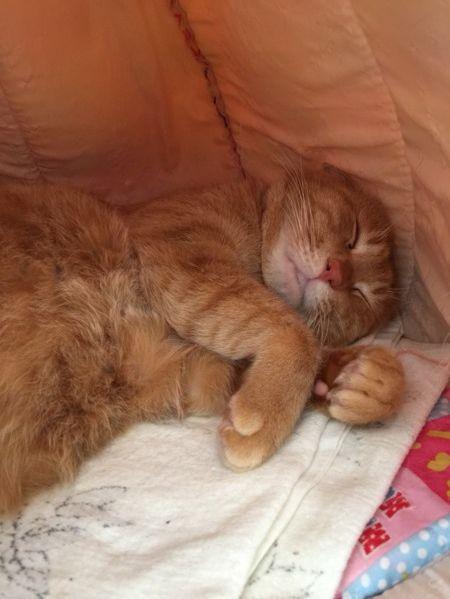 鞄に入れて棄てられていた猫005