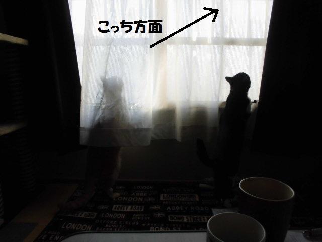 CIMG5848_20180112103919e38.jpg