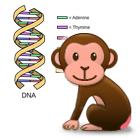 DNAチンパンジーSamsung