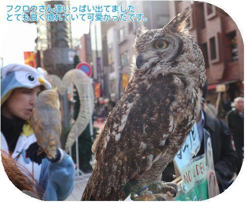 ④フクロウ