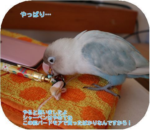 ④シャーペン
