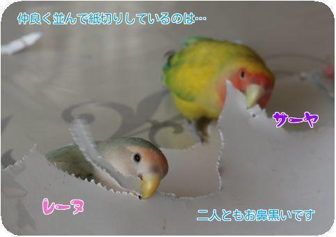 ⑥レーヌとサーヤ紙切り
