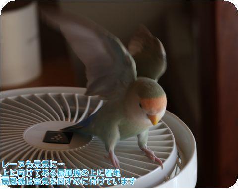 ④レーヌ扇風機