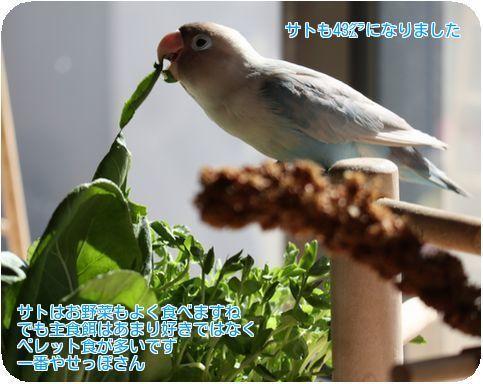 ③サトお野菜