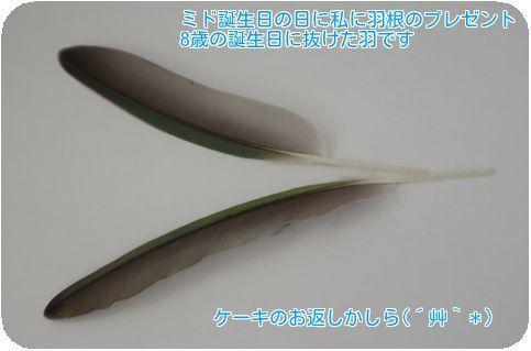②ミドの羽