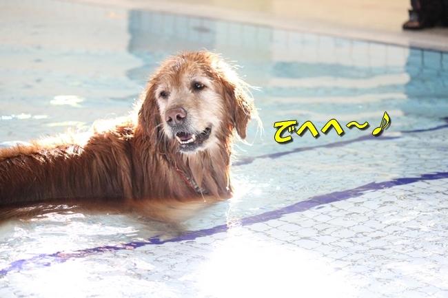 初泳ぎ孤独のグルメ 029