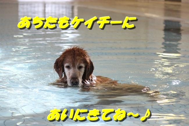 初泳ぎ孤独のグルメ 045
