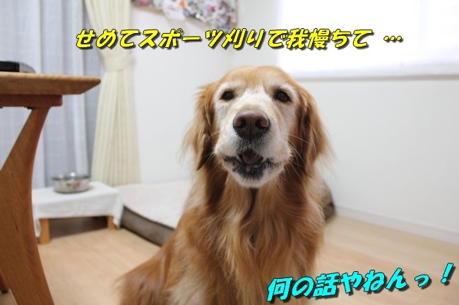 未踏峰新聞テーブル 029