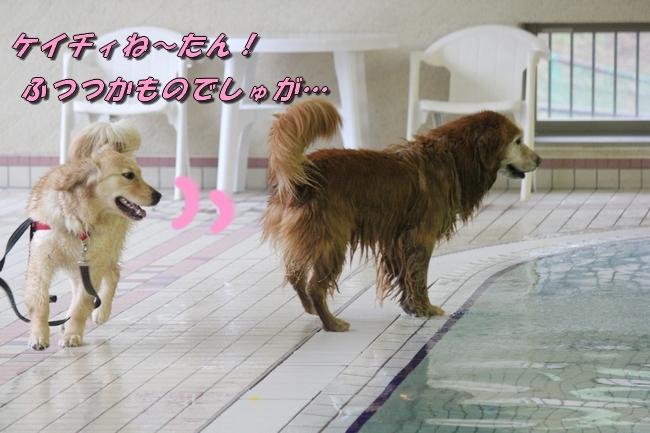 キロロちゃん仁くんサム君プール 015