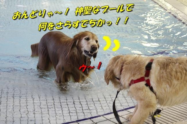 キロロちゃん仁くんサム君プール 010