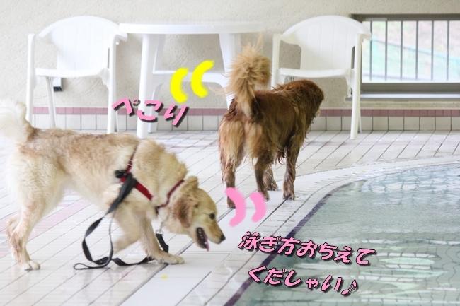 キロロちゃん仁くんサム君プール 016