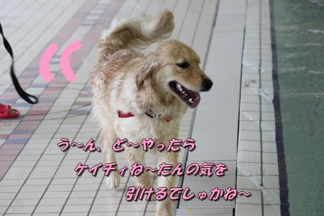 キロロちゃん仁くんサム君プール 021