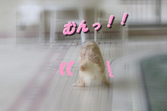 キロロちゃん仁くんサム君プール 026