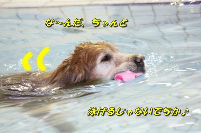 キロロちゃん仁くんサム君プール 080