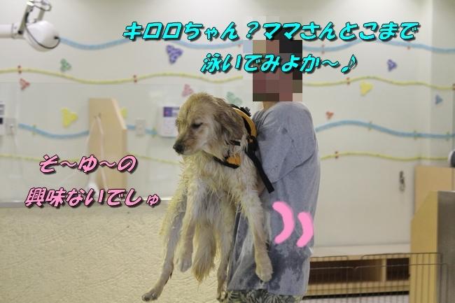 キロロちゃん仁くんサム君プール 249