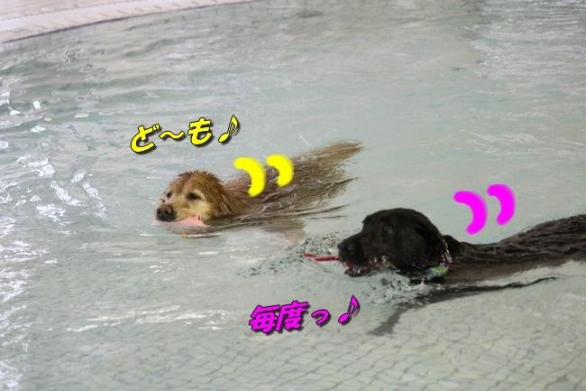 キロロちゃん仁くんサム君プール 314