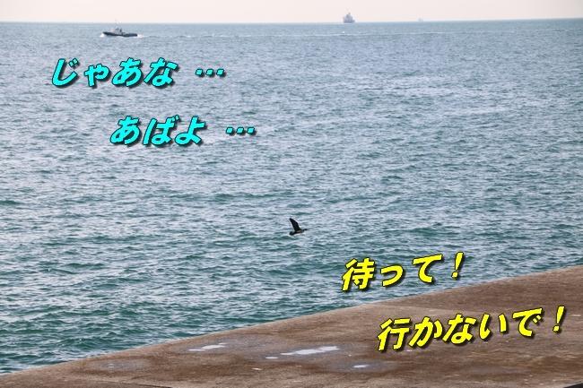 明石大蔵海岸サム君と 070