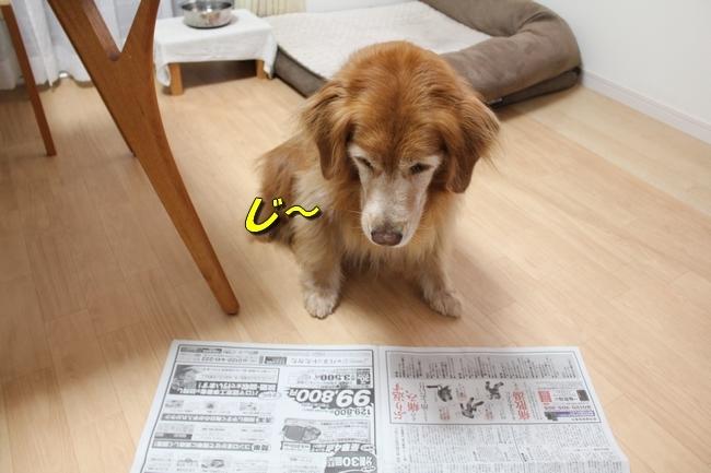 未踏峰新聞テーブル 036