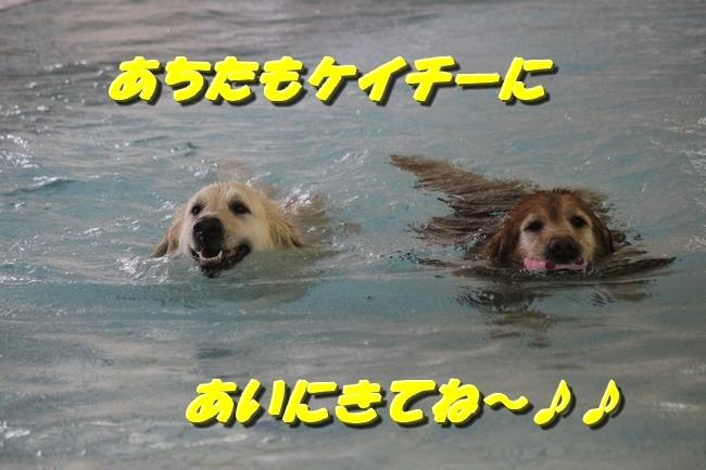 プールカーリング小平 010