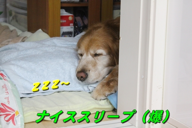 カーリング安眠 017