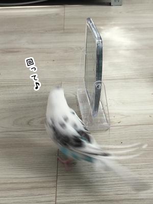 IMG_8717j.jpg