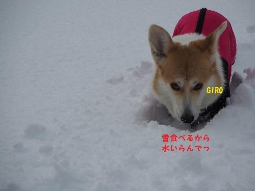 雪食べるわ