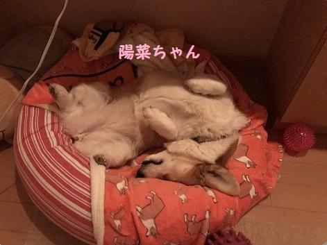 陽菜ちゃん寝相