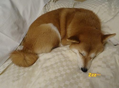 3おやすみなさい
