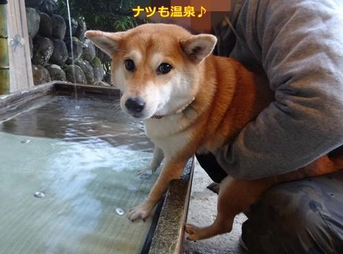 1温泉です