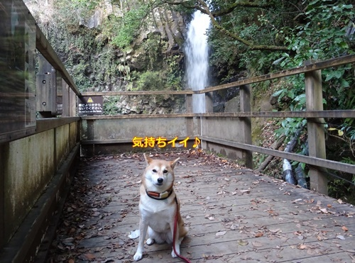 4河津七滝