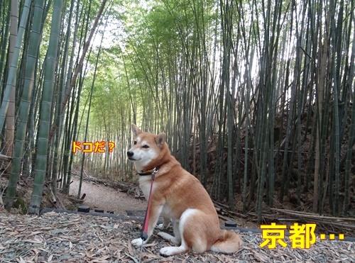 1京都・・・