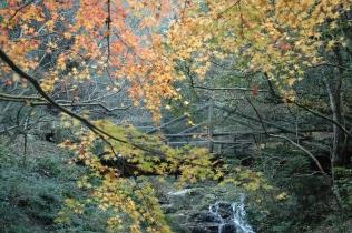 水の森16120206