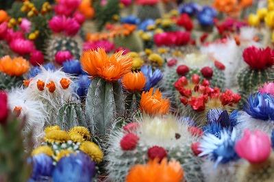 cactus-2721269_960_720.jpg