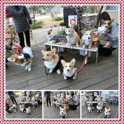 ドッグカフェ2