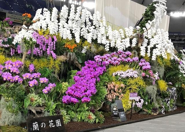 ディスプレイ部門オープンクラス 奨励賞 千葉県洋らん生産者組合(蘭の花園)