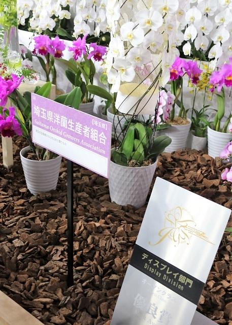 ディスプレイ部門オープンクラス 優良賞 埼玉県洋蘭生産者組合(らんの国埼玉)