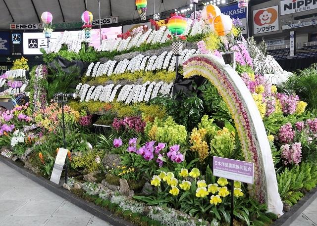 ディスプレイ部門オープンクラス 優良賞 日本洋蘭農業協同組