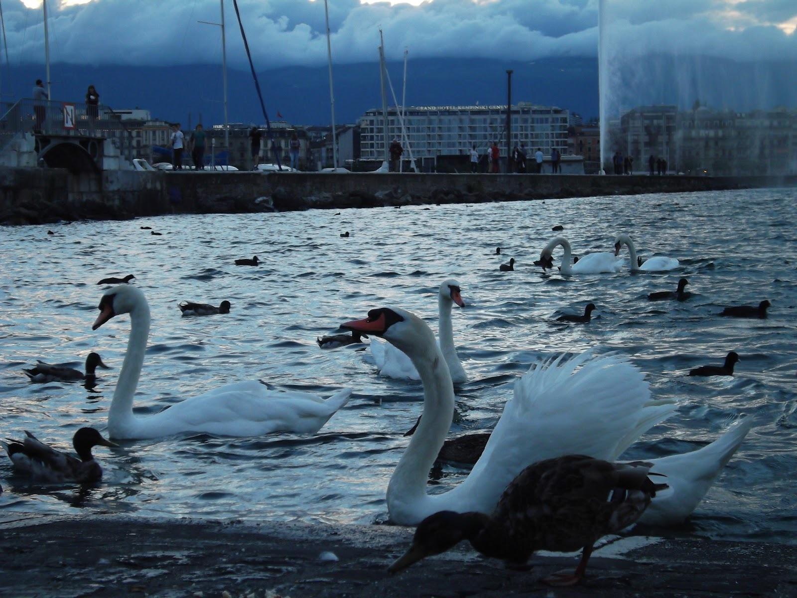 Jet dEau swan
