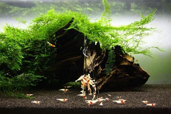 shrimp cafe_0380