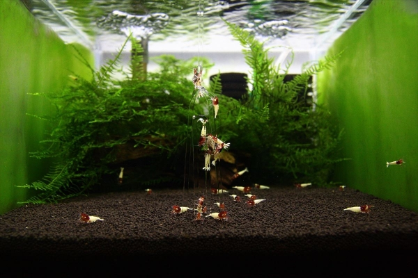 shrimp cafe_0385