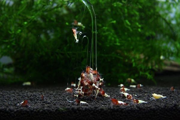 shrimp cafe_0386