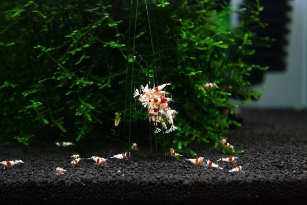 shrimp cafe_0388