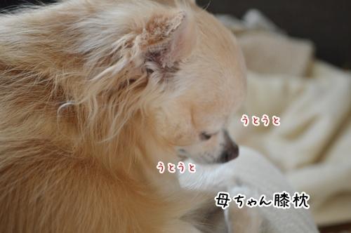 DSC_0669.jpg