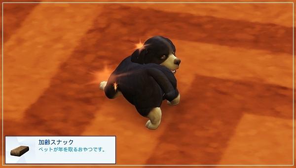 CandD-Hjikata20-20.jpg
